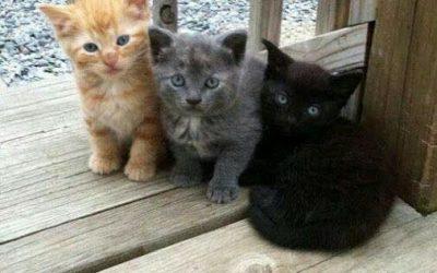 Les merveilleux pouvoirs des chats : Légendes, rites et magie